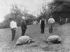 Johnathan_and_another_tortoise_,_St_Helena.png