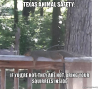 texas-animal-safety.png